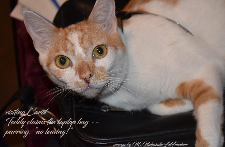 Cat Haiku & Feline Fridays : Teddy