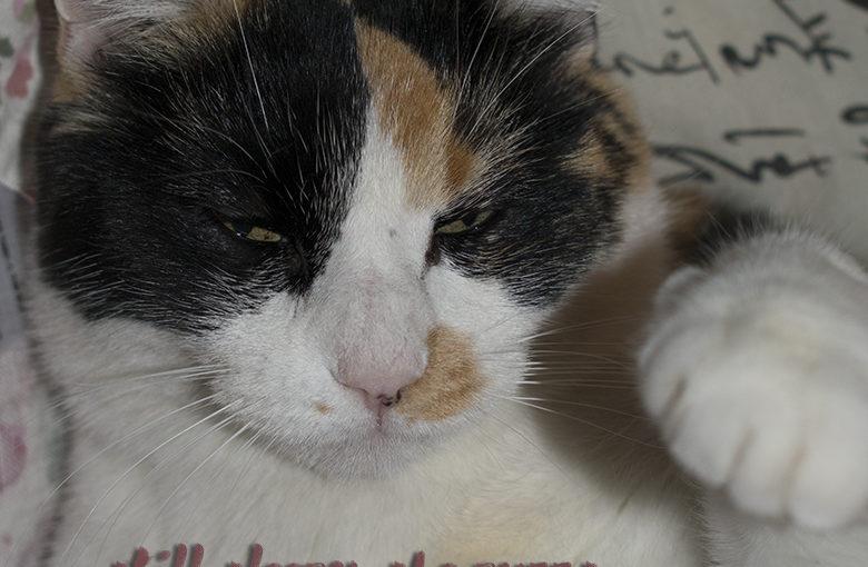 Senryu : My Cat Pinkie