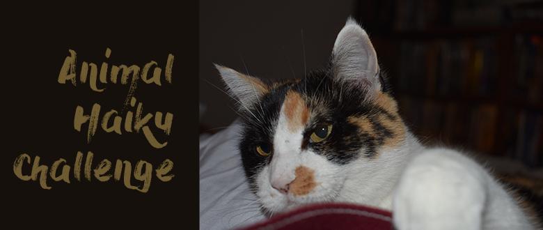 Wk 3: Come Join Animal Senryu / Haiku / Tanka  Challenge