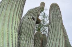 Cactus Haiku