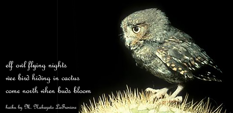 Haibun: Elf Owl