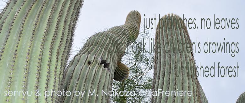 Haiku: Cactus