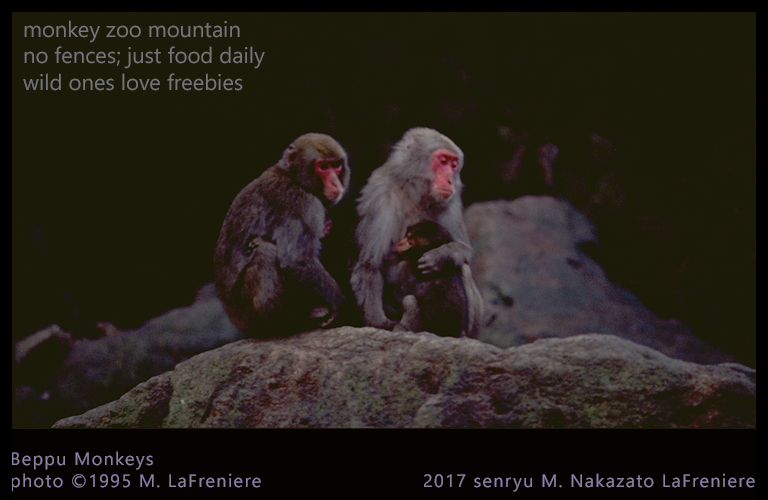 Senryu : Monkey Mountain