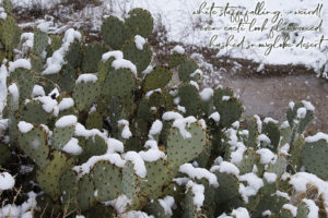 rare snow on cactus, photo by M. LaFreniere, all rights reserved, Cactus Haiku