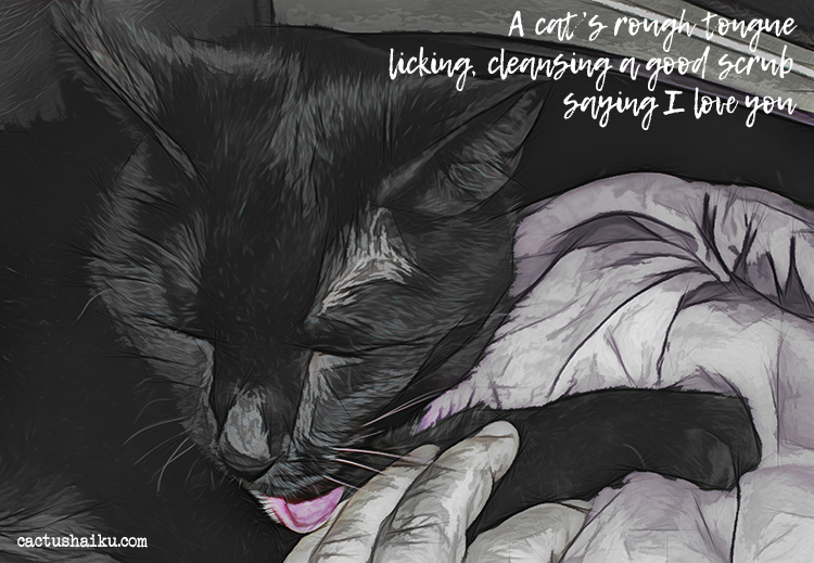 digitally manipulated photograph of my black cat, Midnight, by M. LaFreniere, all rights reserved, cactushaiku.com