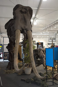 Woolly Mammoth cast sculpture with it's amazingly long tusks